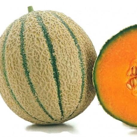 melone-retato-